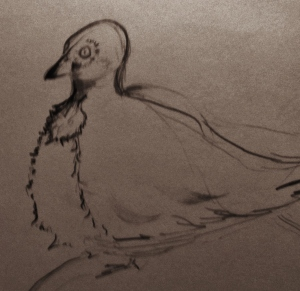 My version of a Pigeon