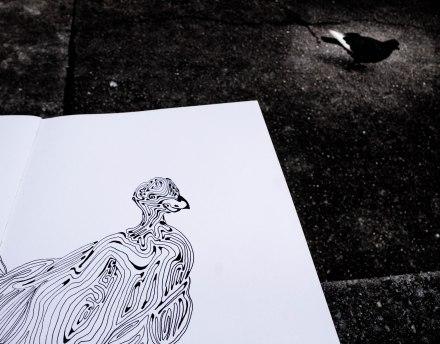 Continuous Line Pigeon
